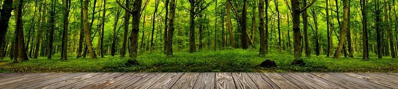 panorama z drewnianego tarasu